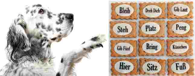 Hundekommandoas spielerisch erlernen