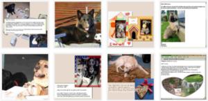 Kundenmeinungen über Hundekekse - Test